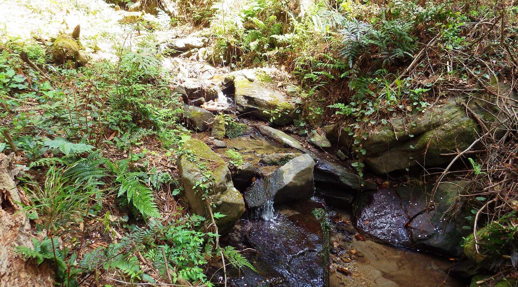 宝篋山極楽寺コースの小滝