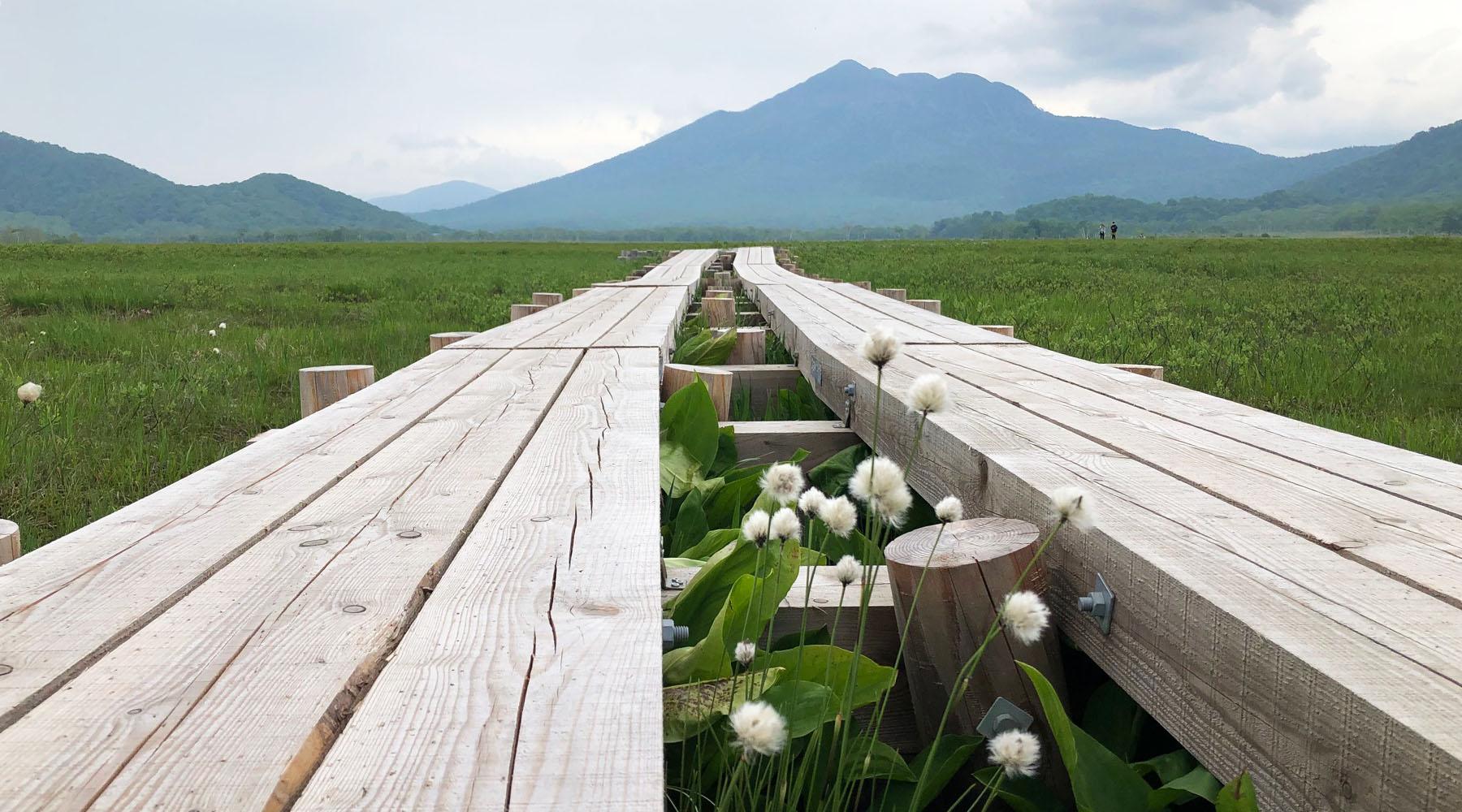 尾瀬ヶ原の木道